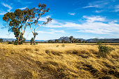Grassland landscape in the bush with Grampians mountains in the background and blue sky, Victoria, Australia