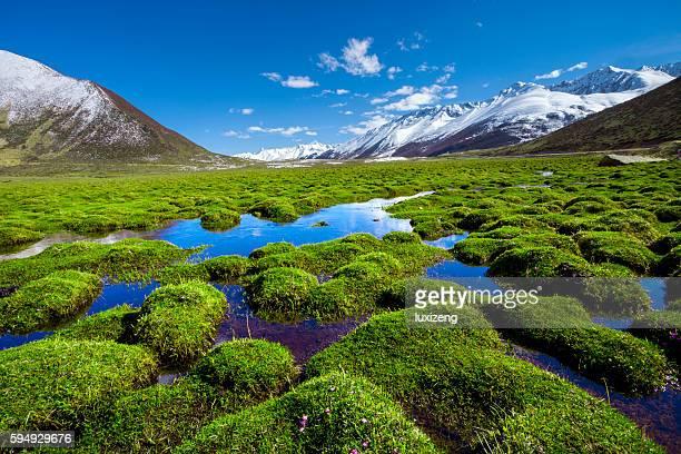 grassland on plateau