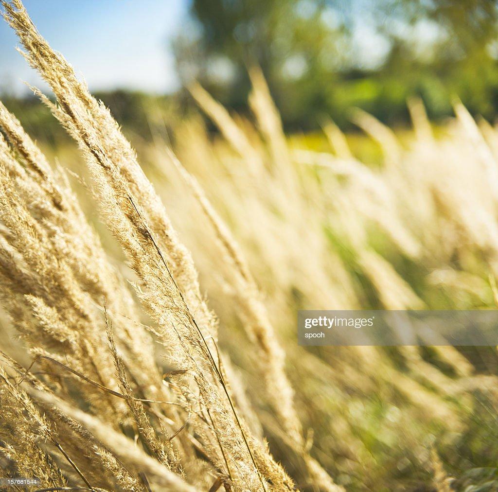 Grassland : Stock Photo
