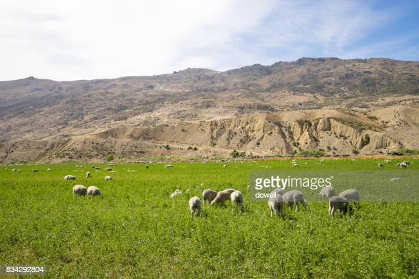 grassland with animals near mountains in blue sky