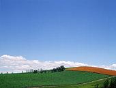 Grasslands in Biei-Machi, Hokkaido, Japan