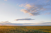 Grasslands in late afternoon sun.