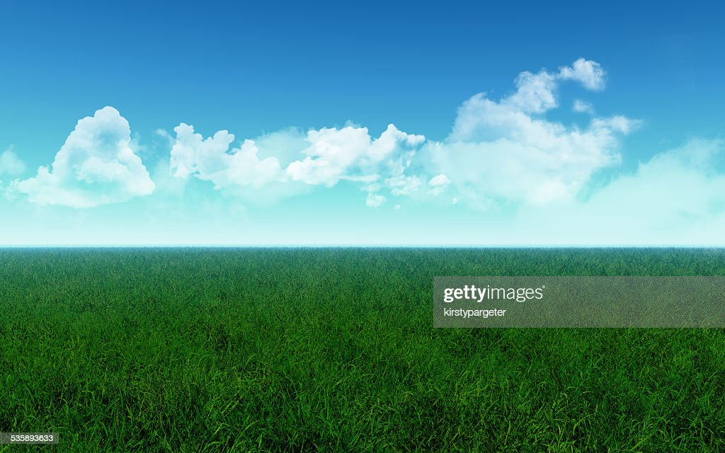 Grassy field : Stock Photo