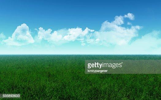 Grassy field : Bildbanksbilder