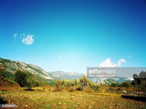 Grassy Landscape And Mountains Against Blue Sky