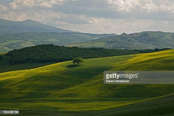 Grassy rolling hills in rural landscape
