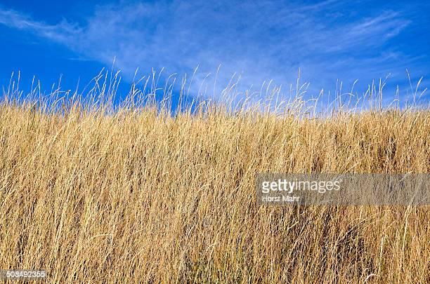 Grassy slope, Black Canyon of the Gunnison National Park, Gunnison, Colorado, USA