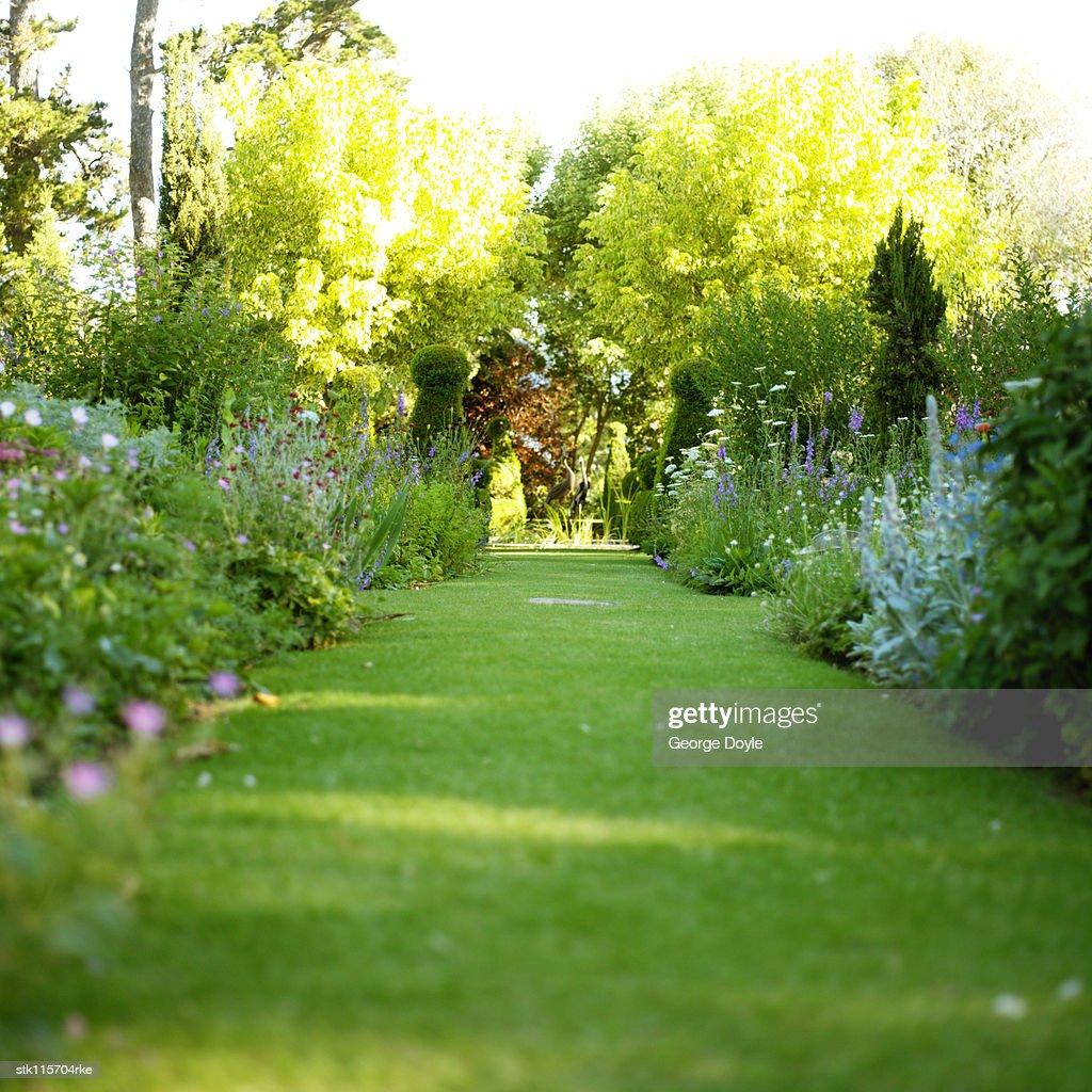 grassy walkway in a garden