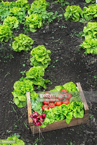 Grate full of raw vegetables leaning on ground