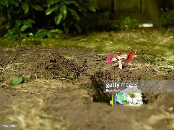 grave of pet mouse