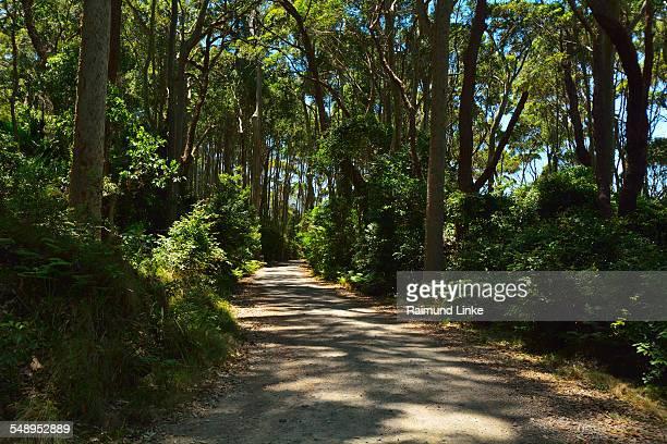 Gravel Path in Bush