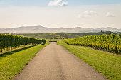 gravel road across autumn vineyard in Marlborough region, South Island, New Zealand