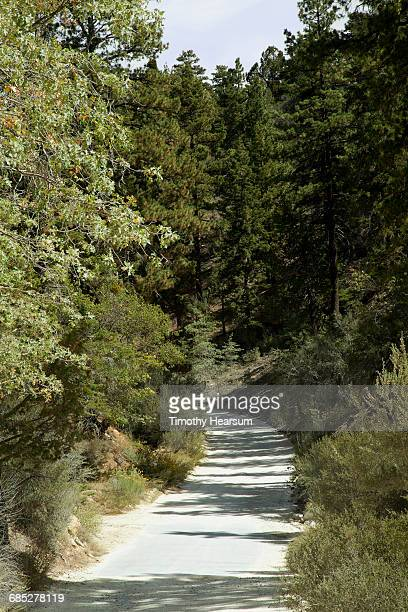 Gravel Road through thick forest