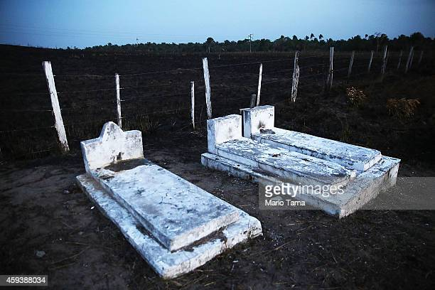 Graves sit at the edge of a burned section of grazing land in a deforested section of the Amazon basin on November 21 2014 in Maranhao state Brazil...