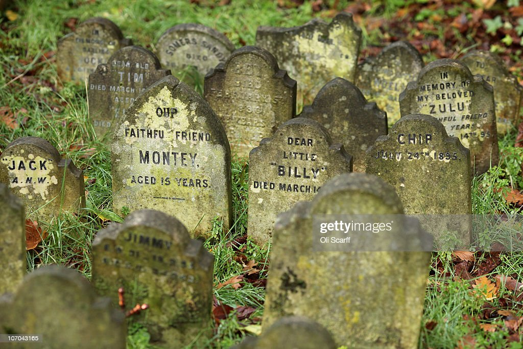 Gravestones for deceased pets stand in the Hyde Park pet cemetery on November 18, 2010 in London, England. The cemetery is situated in the small garden of Hyde Park's Victoria Gate Lodge and was created in the 1880s. It contains over 300 graves although the last pet was laid to rest in 1976. George Orwell is reputedly to have described the cemetery as 'perhaps the most horrible spectacle in Britain'.