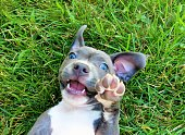 I took this picture in my backyard in Columbus, Ohio of our beautiful, sweet, playful Pit Bull named Mia.