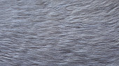 gray dog fur for abstract or background