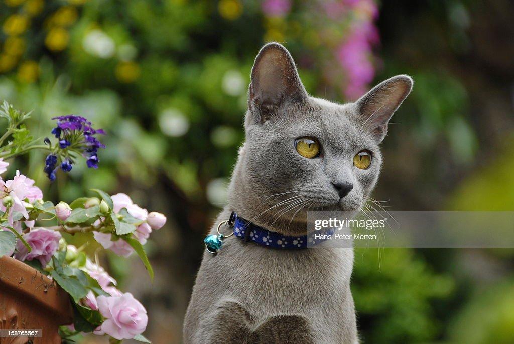 gray male cat : Stock Photo