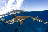 Gray reef sharks and Blacktip Reef Sharks