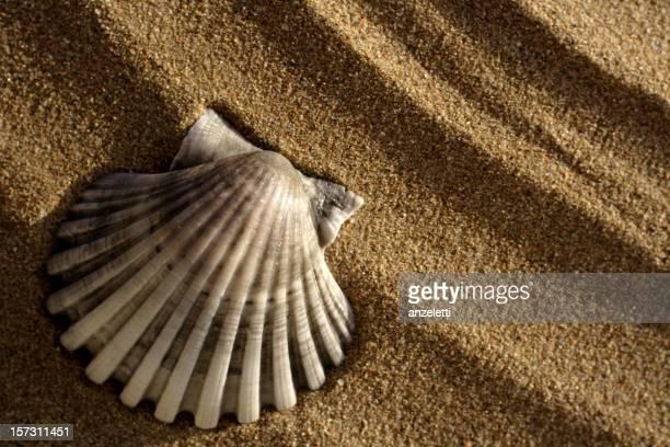 Gray shell
