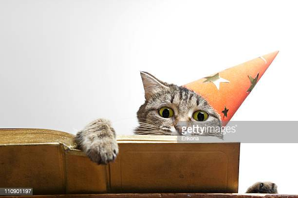 Gray tabby cat with a party hat reading a book