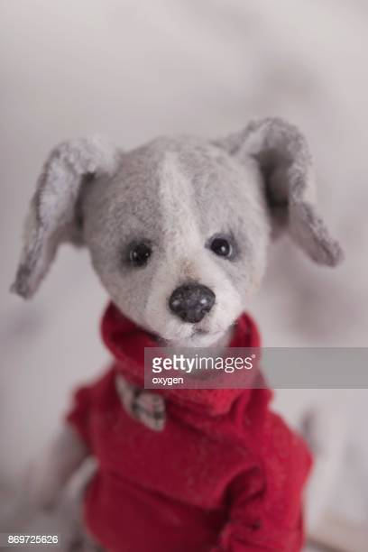 Gray Toy Teddy Dog portrait in a red sweater
