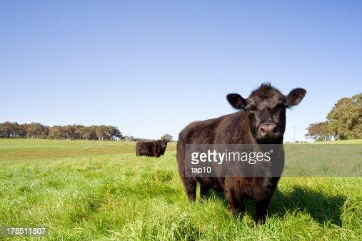 Grazing Farm Animals