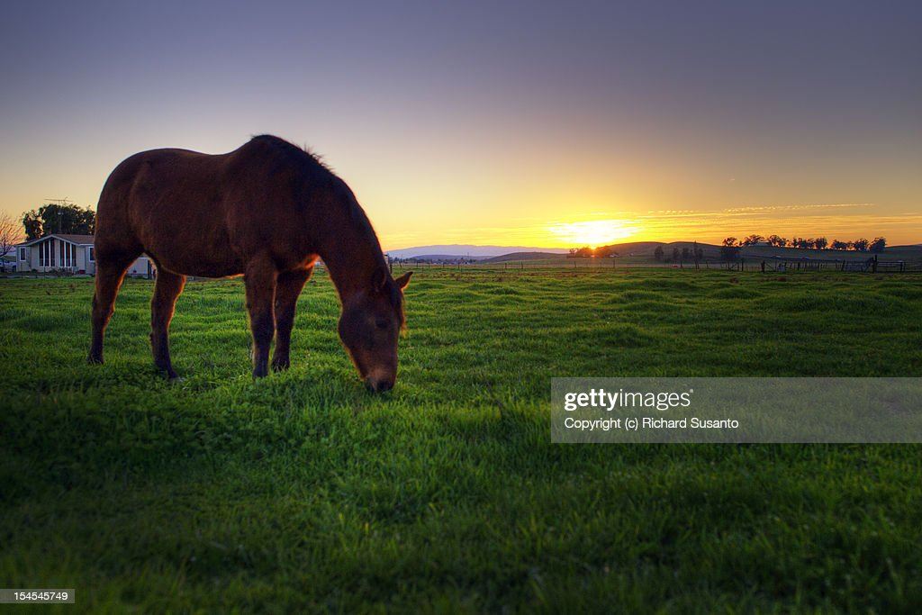 Grazing horse : Stock Photo