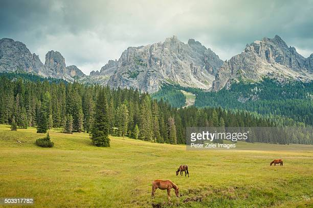 Grazing horses in the mountain pasture