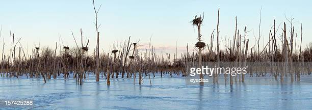 Great Blue Heron Nests in Winter