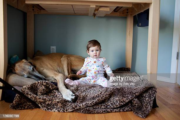 Great Dane and baby girl under table