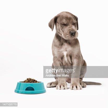 Runny nose (rhinorrhea) (eldad hagar (please support hope for paws