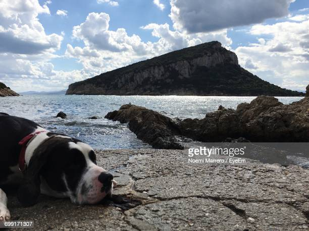 Great Dane Resting On Shore Against Island