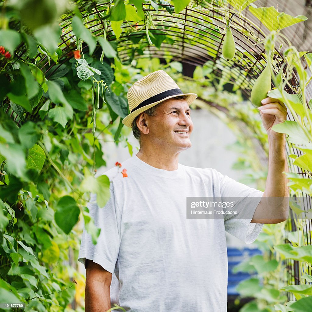 Great Harvest : Stock Photo