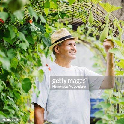 Great Harvest : Stock Photo