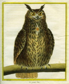 Great Horned Owl Bubo virginianusGreat Horned OwlGeorgesLouis Leclerc Comte of Buffon 'Natural History of birds fish insects and reptiles' coloured...