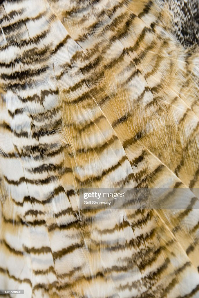 Great horned owl feather pattern : Stock Photo