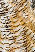 Great horned owl feather pattern