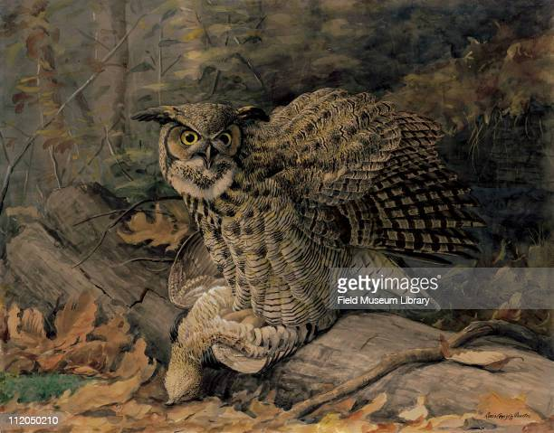 Great horned Owl Plate 0X2 a watercolor Louis Agassiz Fuertes 1926