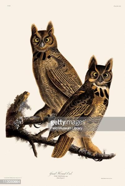 Great Horned Owl Plate 61 in John James Audubon's Birds of America late 1830s