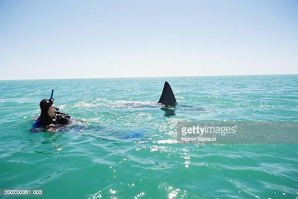 Great white shark swimming past female diver in sea