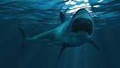 Great white shark underwater diagonal, focus on the front half