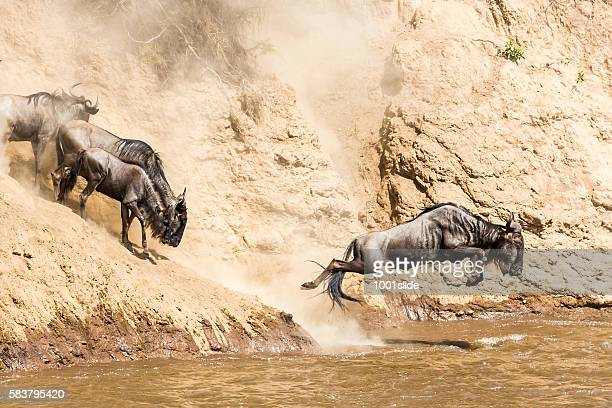 Great Wildebeest Migration in Kenya
