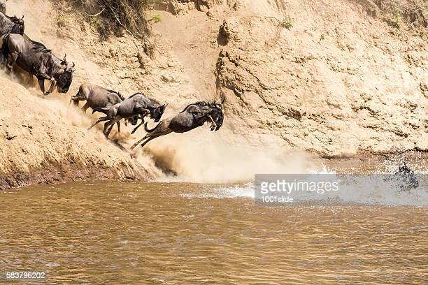Grande GNU migração no Quénia
