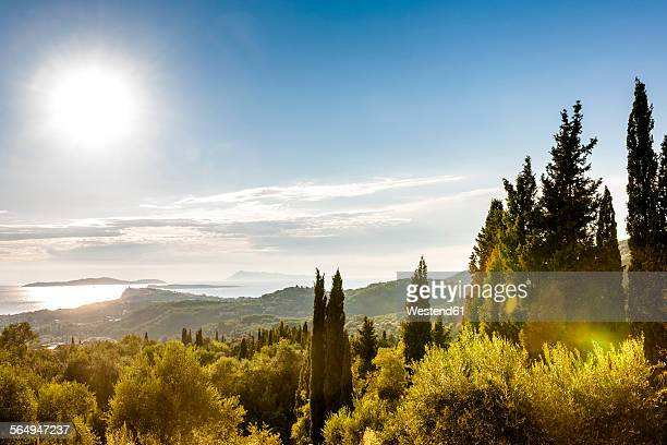 Greece, Corfu, cypresses at the coast in sunlight