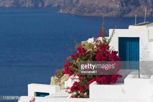 Greece, Cyclades, Thira, Santorini, Bougainvillea and houses with Aegean sea