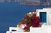 Greece, Cyclades, Thira, Santorini, Bougainvillea and houses with Aegean sea