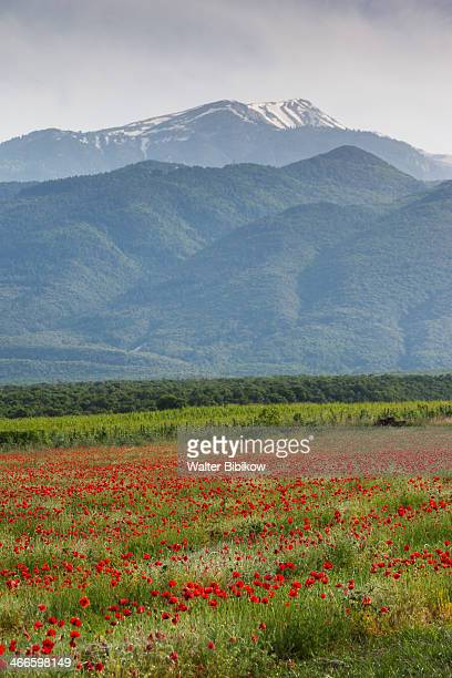Greece, Dion, Mount Olympus