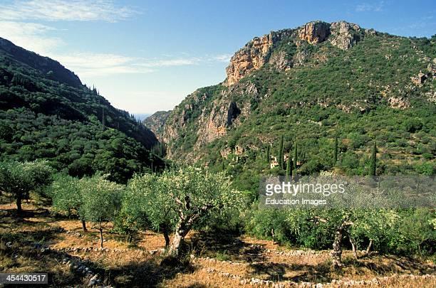 Greece Kardhamyli Olive Grove