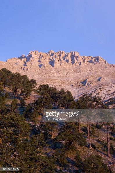 Greece Macedonia Pieria View of eroded pinnacles of highest peak of Mount Olympus called Mytikas over trees clinging to lower slopes